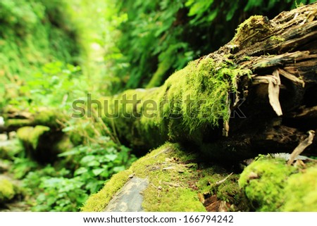 Redwood National Park 02 Moss covered tree in Fern Canyon California USA