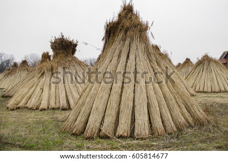 reed #605814677