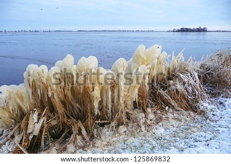 reed and frozen lake