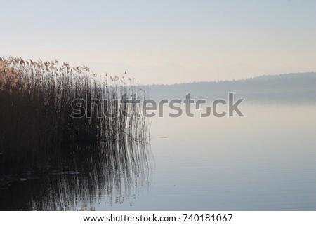 reed grass on lake #740181067