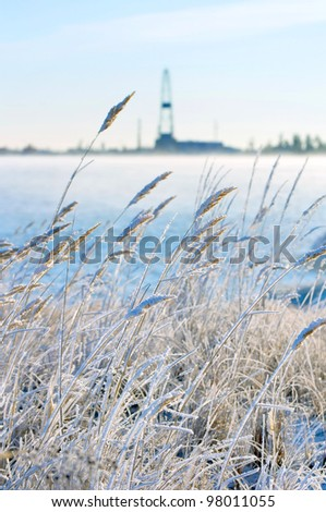 Reed in frost with a drilling derrick in the background. The first frost in Siberia at the end of October.