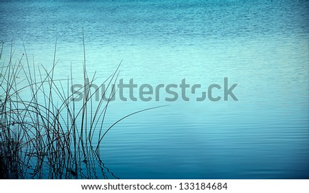 reed in the night reflected in blue water waves