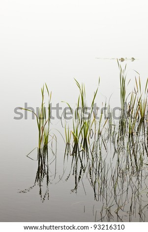 Reed leaves at the wateredge of Lake