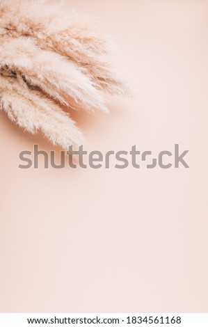 Reed Plume Stem, Dried Pampas Grass, Decorative Feather Flower Arrangement for Home, Beach Theme, New Trendy Home Decor, copy space