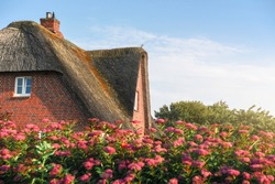 Reed roofed house with rose bushes fence, on Frisian island, Sylt, at North Sea, Germany. Traditional Scandinavian house. Summer day on Sylt island.