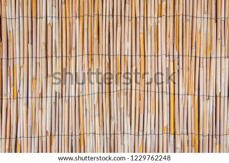 reed stalk wall background texture