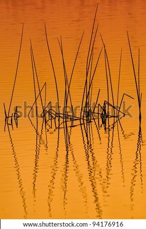 Reeds at dawn at the Ritch Grissom Memorial Wetlands (often referred to as the Viera Wetlands) in Melbourne, Florida