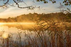 Reeds at the water's edge and the autumn morning fog on the lake at sunrise