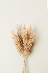 Reeds foliage branches bouquet on neutral pastel beige background.