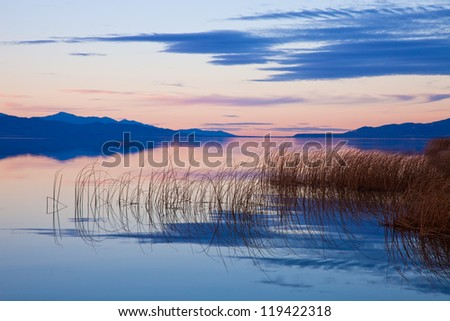 Reeds in Lake at Dusk