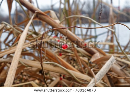Reeds in the lake, Swaying Reed background for web site or mobile devices #788164873