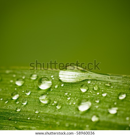 Reeds leaf with water drops on it. With space for text.