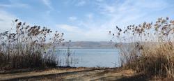 Reeds near the lake. Sadgies on the lakeside