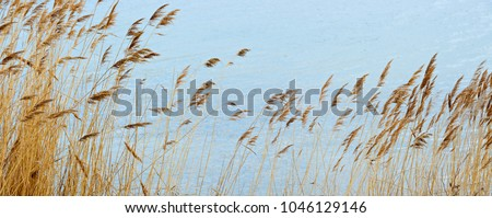 Reeds swaying in the wind #1046129146