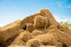 Reeds texture. Straw surface. Thatch pack canvas. Straw pack texture. Stack of straw texture image. Dry stems photo backdrop. Dry stalks of cereal plants background. Dry stems of cereals in sunny day.
