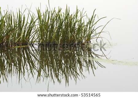 Reeds with Reflection, Shapwick Heath Flooded disused Peat works on the Somerset Levels