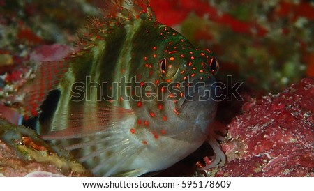 reef fish on coral #595178609