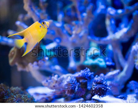 Reef fishes in reef tank. #1424602358