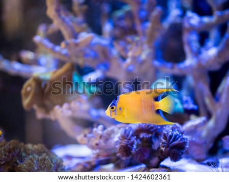 Reef fishes in reef tank. #1424602361