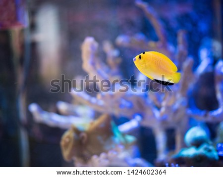 Reef fishes in reef tank. #1424602364
