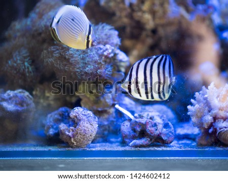 Reef fishes in reef tank. #1424602412