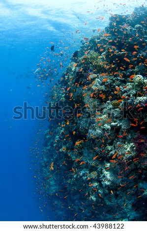 Reef, red Sea, south Sinai, Egypt
