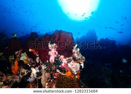 Reef under the sun #1282315684