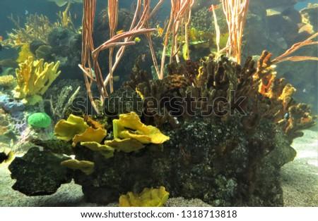 Reef, underwater, fish #1318713818