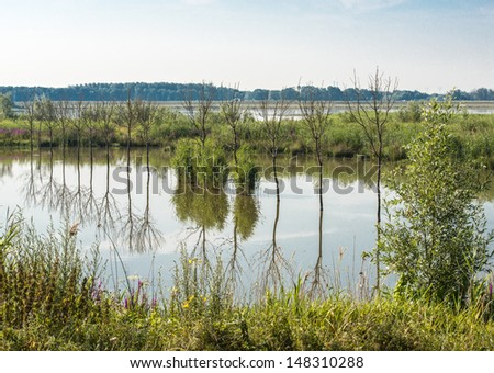 Reflected straight bare trees in the mirror smooth water surface on a windless summer day.