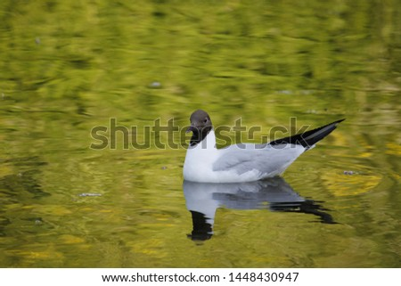 Reflection are pure of pure birds #1448430947