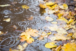 reflection in the puddle with leaves and rain drops