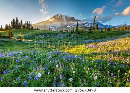 Reflection lake trail Sumeer, Mount Rainier National Park