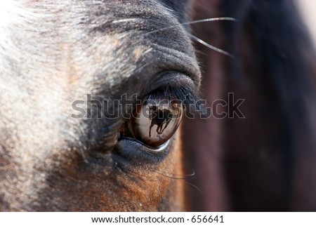 Reflection of a running horse in a horse's eye