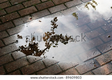 reflection of a tree in a puddle