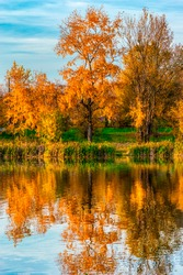 Reflection of autumn trees with orange foliage in the calm waters of the river