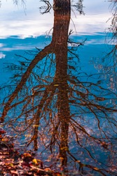 Reflection of branches on the water