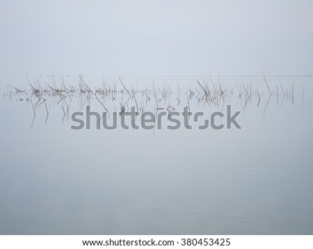 Reflection of dry marsh bulrush branches in a quiet lake in early spring in cloudy weather #380453425