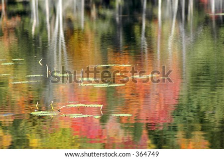 reflection of fall foliage in pond