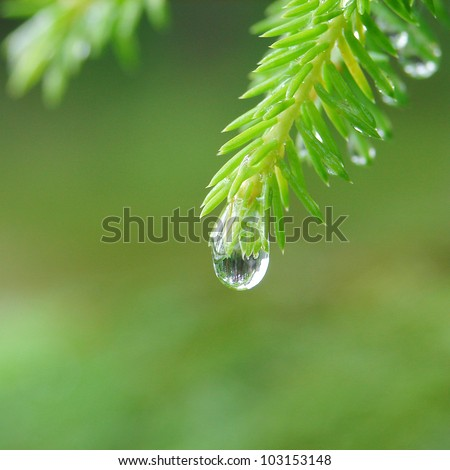 Reflection of forest in raindrop