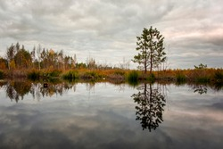 reflection of lake in swamp