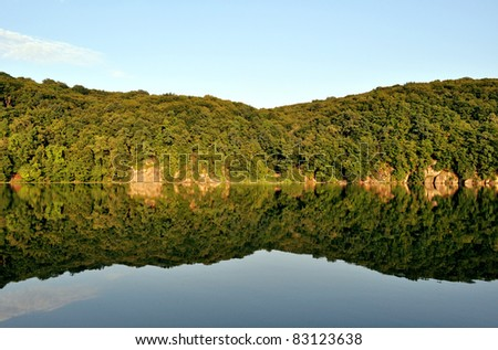 reflection of the forest