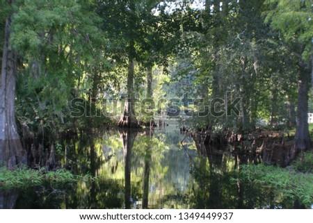 reflection of trees  #1349449937