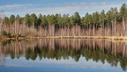 Reflection of trees in a lake at the Kalmthoutse heide in Belgium. Looking like Canada. Blue sky.