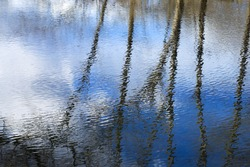 Reflection of trees in the water
