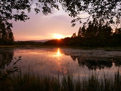 reflection of trees in water, vegetation on the water, sunset light. Loch Clarach, Scotland.