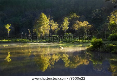 Reflection of tropical trees lit by sunrise