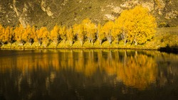 Reflection of yellow autumn trees in a small pond, Central Otago, South Island