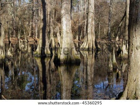 Reflections in a Cypress Swamp - stock photo