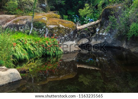 "Reflections in a Woodland Lake. Red and Blue Flowers and a ""Bridge"" Formed by a Fallen Log Mirrored in the Still Waters"
