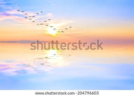 reflections in the calm sea #204796603